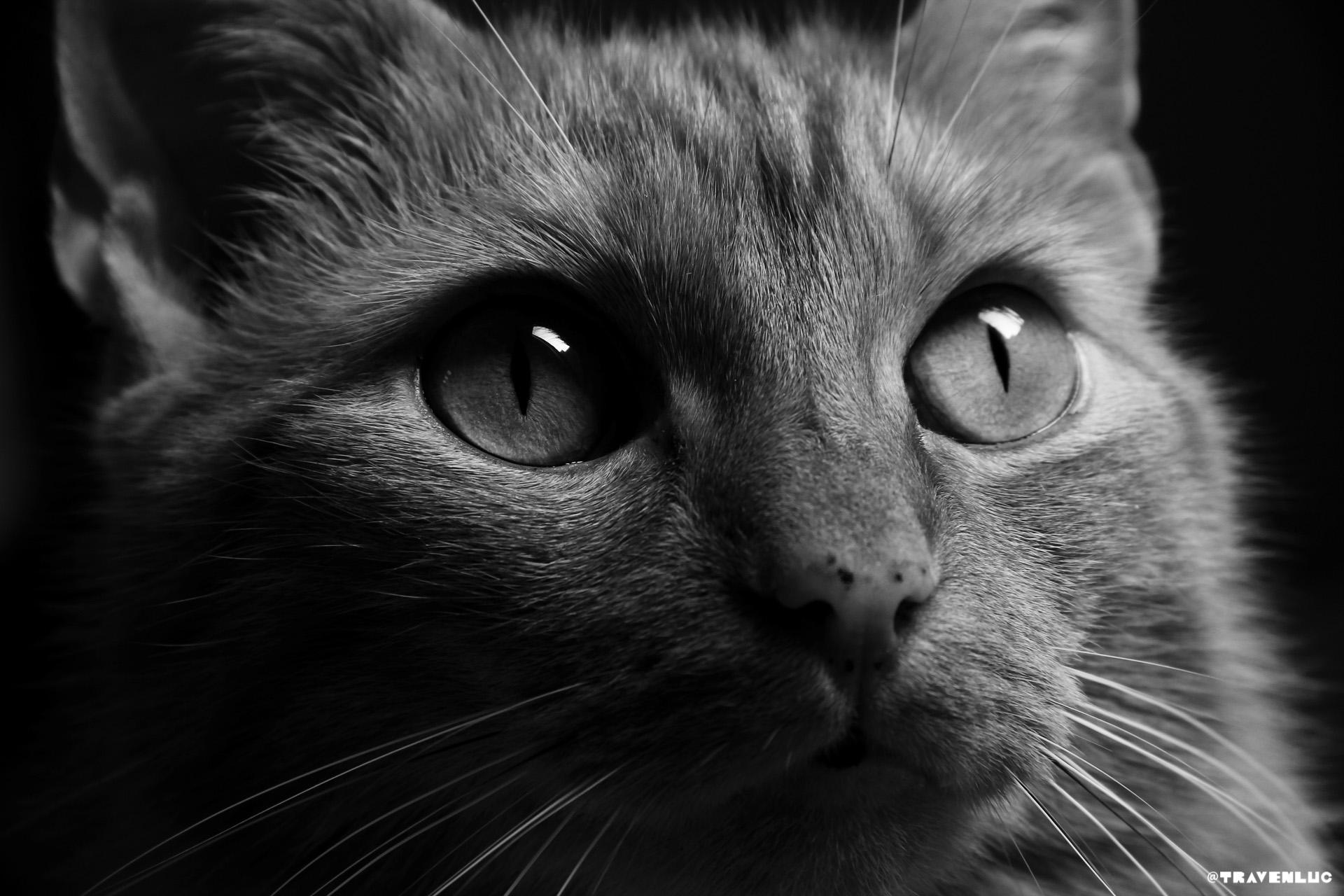 Cat - Boa @travenluc