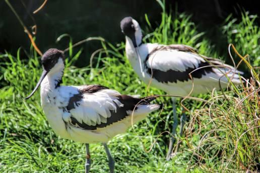 bird-in-belgium-travenluc-1