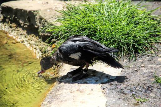 bird-in-belgium-travenluc-3