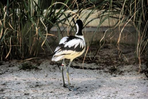bird-in-belgium-travenluc-4