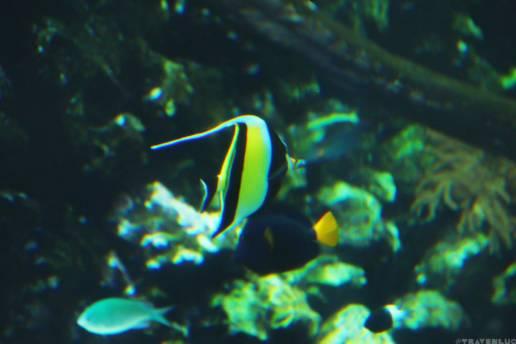 fish-in-belgium-travenluc-3