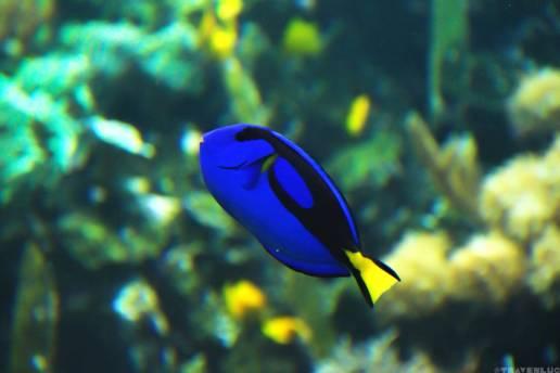 fish-in-belgium-travenluc-4