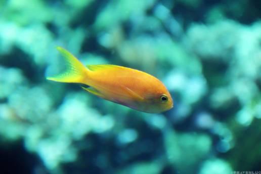 fish-in-belgium-travenluc-5