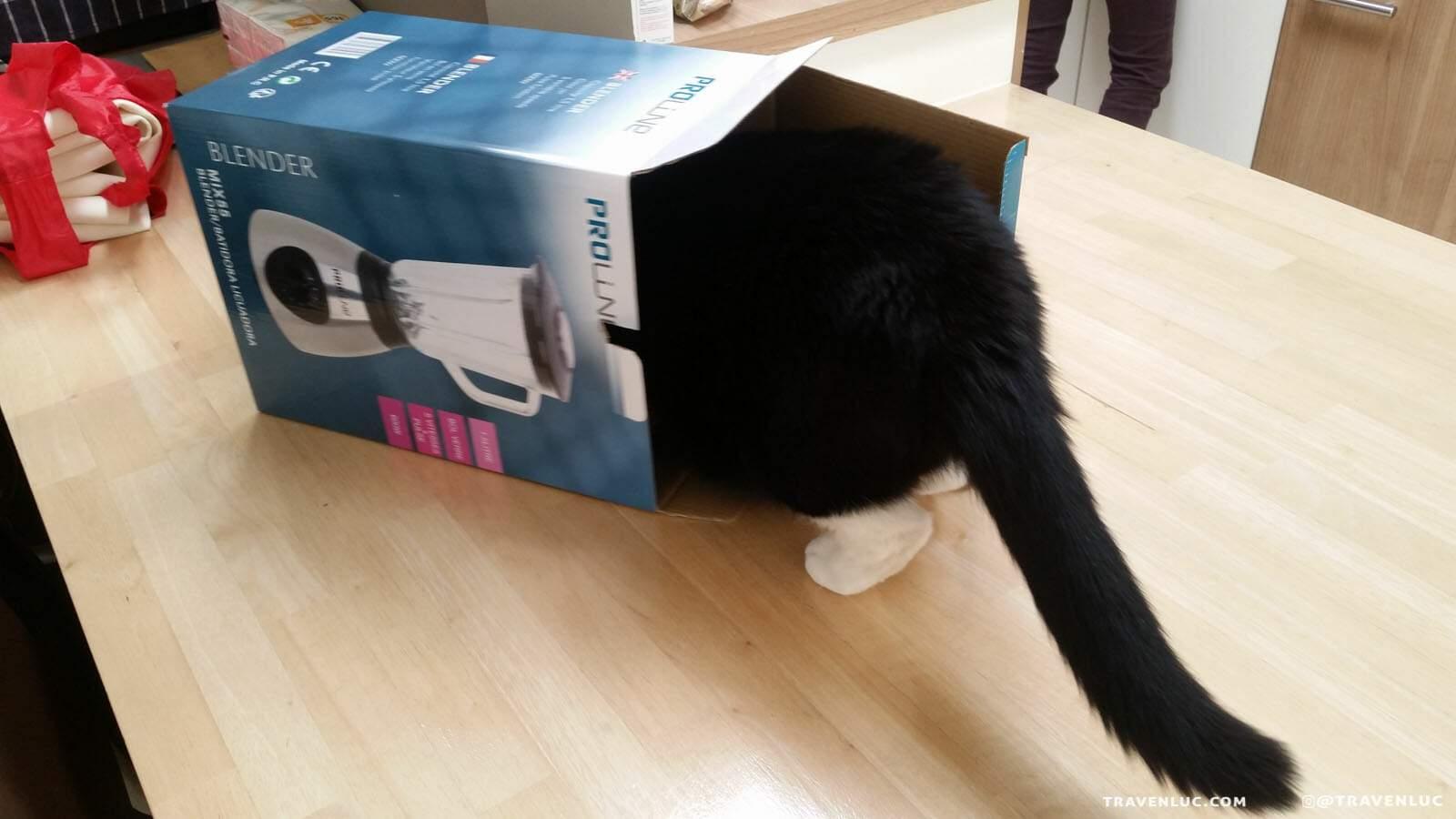 可愛禮服貓圖片 - TUXEDO CAT