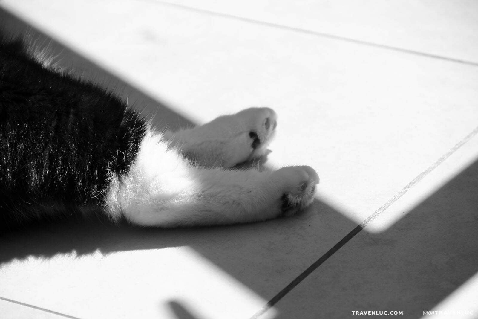 black and white cat photography traven luc